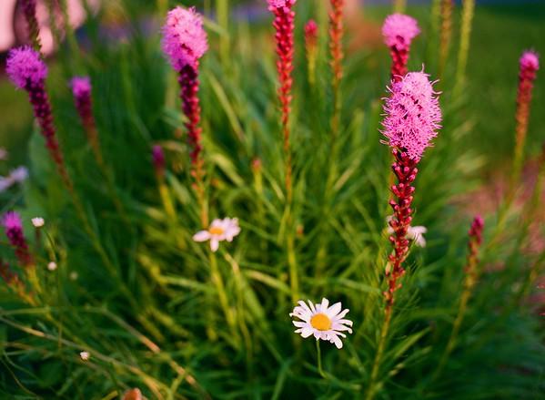 005wildflowers